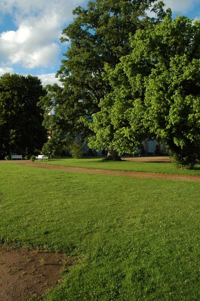 Baum im Wachstum